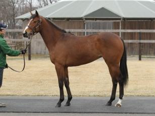 【競馬】 オルフェ全妹オルファンが今週デビュー!「小さくてかわいらしい牝馬です」