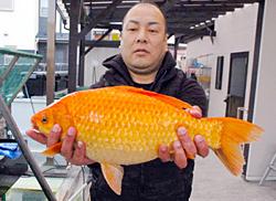 【画像】琵琶湖で釣られた金魚でかすぎwwwwww