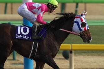 【競馬】 ワンダーアキュート(9歳)年内で引退 種牡馬に