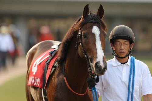 2013年 おまえらが期待する馬