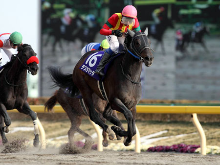 【競馬】 テスタマッタ、韓国で種牡馬入りへ 根岸Sレース後に浅屈腱炎判明