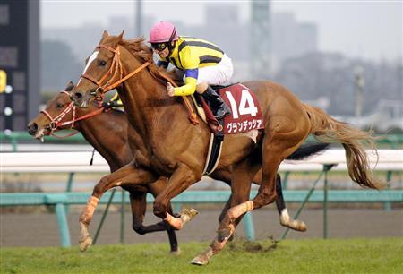 【競馬】 グランデッツァが引退… 種牡馬入りの予定