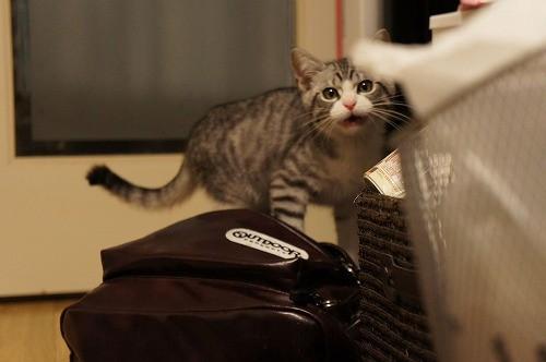 愛猫が死んだら悲しみの余りサウザー状態になって二度と飼うまいと思うよな
