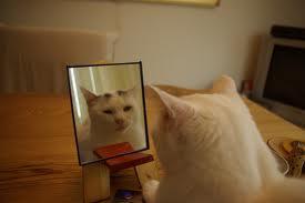 鏡に向かって「おそろやーんwww」って言ってたら一日が終わってた