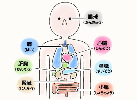 脳「この中に要らない臓器が一つありまーーーすwww」