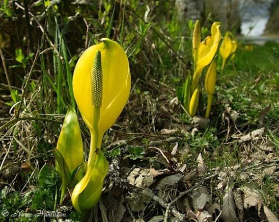 【植物ヤバイ】 恐怖の殺人植物ベスト10……触れただけで死ぬ、人を催眠状態に陥らせるなど