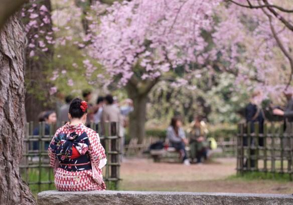 京都在住だが、花見客がウザすぎる
