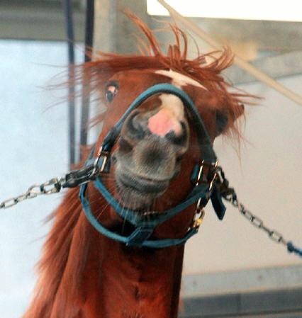 【競馬】 オルフェーヴル、「種付けは大好き」 220頭と交配