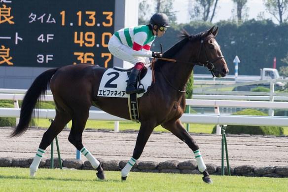 【競馬】 エピファネイアは今年の秋に覚醒する