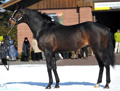 【競馬】 種牡馬スペシャルウィーク(牡17)がレックススタッドに移動