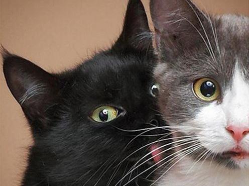 「猫は飼い主を殺害しようと機会を伺っている」という研究結果 … エジンバラ大学の研究でユキヒョウ等の野生のネコと家猫に似ている特有点