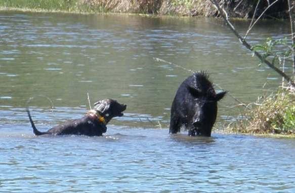 狩りが得意なうちの犬に大物狩りを命じたら大変なことに