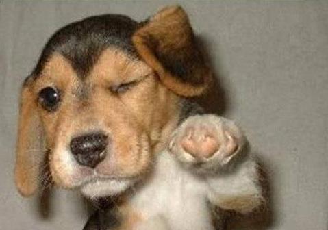 一ヶ月飼って情が移った犬に先天性の疾患が見つかる。どうすればいいの...