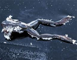 蛙は何故冬眠しなければいけないのか、その理由が激写される