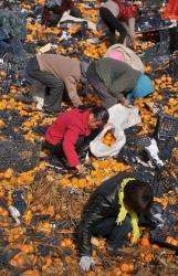 トラック横転で「みかん30トン」ばら撒く、近所の村民が次々にやってきて争奪戦…中国