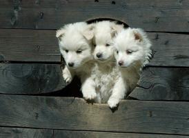 カッコイイ犬の画像をおまえらが貼ってく