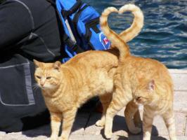 【画像あり】可愛い猫の画像が怖い