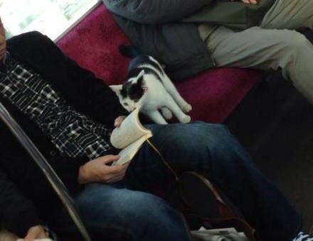 昼下がりの小田急線、迷いねこが一匹で乗車 (画像) → その後飼い主が無事見つかる
