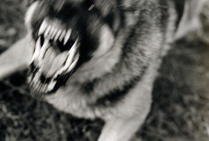 躾の出来てない犬を躾けられた犬が噛み殺した