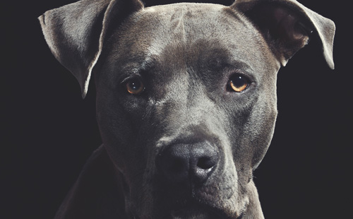 けしかけられた犬が怖くて蹴ってしまった。それがのちのち大問題に発展した