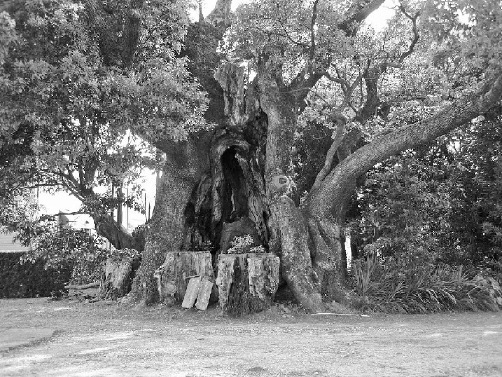 江戸の初期に今の土地に来て以来代々住んでいる自宅の庭から人骨が出てきた