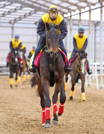 【競馬】 ウオッカの初子・ボラーレ、16日阪神3R(新馬戦・ダート1800m)で初陣 現在馬体重は570kg台、鞍上岩田で初出走