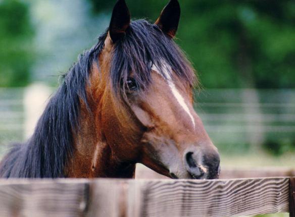 【競馬】 トウカイテイオー逝く…25歳、心臓まひ 奇跡の復活Vの有馬記念、父子制覇のダービーなどG1・4勝