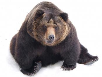 【閲覧注意】娘「今、熊に食べられてるの!!痛い!!助けて」
