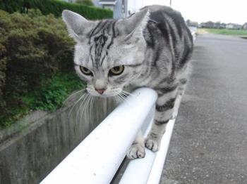 【画像】お前ら猫のこーゆー耳の事なんて呼んでる???