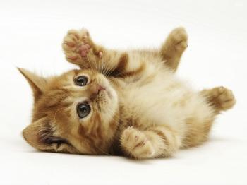 猫「部屋いれろー」→数分後→猫「はよ出せー」(猫画像あり)