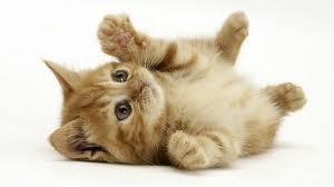 猫を飼ったことがあるやつにだけわかることwwwwww