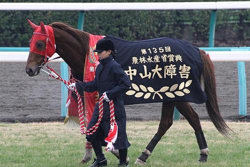 【訃報】2012中山大障害(G1)勝馬マーベラスカイザー(牡5)が腸捻転で急死