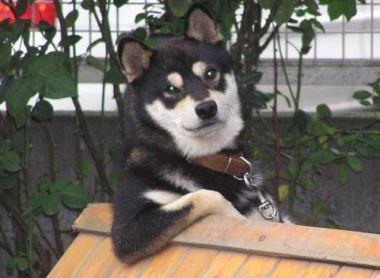 郵便配達員 約2カ月間、民家への配達を怠る … 「犬が怖かった」「雨の日は犬が家の中にいたから、配達できた」 - 福岡