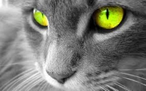 シュレディンガーの猫に対する勘違い率の高さwwwwwwwwwww