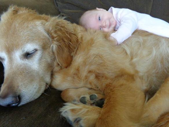 【画像】仲良さそうwwwwww 犬と赤ちゃんの友情を感じる30枚の画像