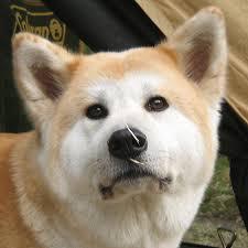 米で話題の「犬を食べることについての議論」が深く考えさせられる・・・・・・ なぜ、「犬」はダメなのか?