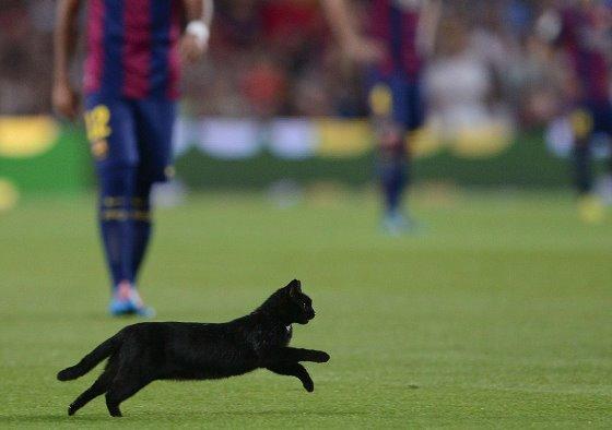 バルセロナ対エルチェの試合中に黒猫が乱入 数分間試合が中断するハプニング