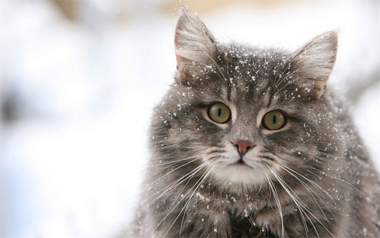 【悲しい話】旅行先で出会った猫の話を聞いて欲しい【捨て猫】