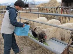 北海道美唄・西川農場の「アスパラひつじ」、臭みのないジューシーな味わい