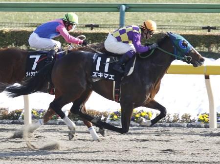 【競馬】 エキマエ、診断の結果は左第一指節種子骨々折