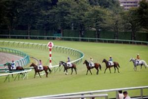【競馬】 「競馬って馬がかわいそう…」←反論できる?