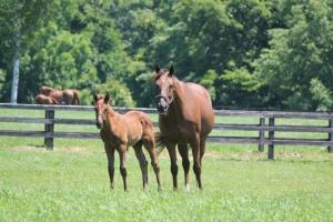 【競馬】 トウショウ牧場の経営がヤバそうな件… 有力馬の売却、資金難の噂?