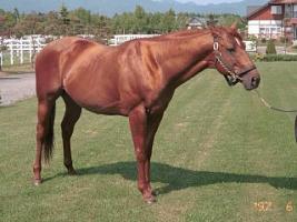 【悲報】 種牡馬、ロドリゴデトリアーノが死去