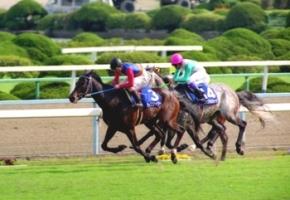 【競馬】 メジロマックイーンとライスシャワーってどっちが強かったの?