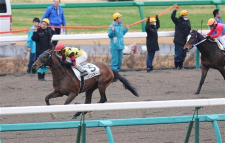 【競馬】 競走中止となった馬が走路上に横たわる スタッフの誘導により最後の直線で全馬外寄りへ待避し無事完走=中山1R [14/03/02]