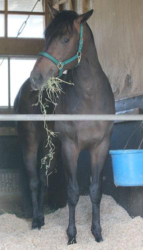 【競馬】 ウオッカ初子・ボラーレが放牧先で急死