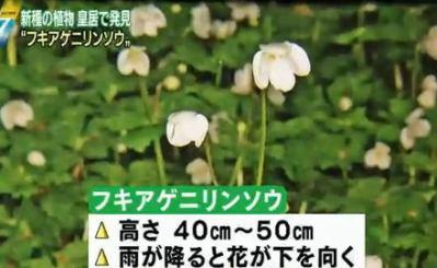 """皇居・吹上御苑で""""新種の植物"""