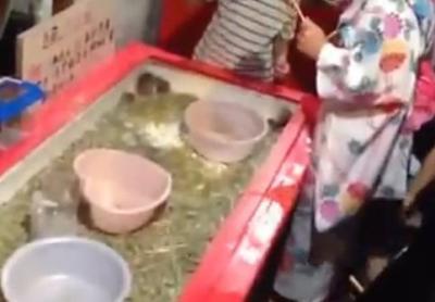 夏祭りに「ハムスター釣り」の露店、1回500円でハムスター釣り、「動物虐待だ」と物議