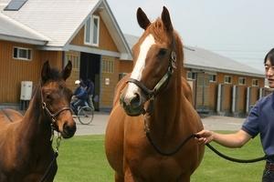 【競馬】 オリエンタルアートが死亡 オルフェーヴル、ドリームジャーニーの母馬
