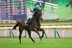 【有馬記念】 ルージュバック、初の在厩調整  大竹師「これまでできなかったことも取り入れられた」